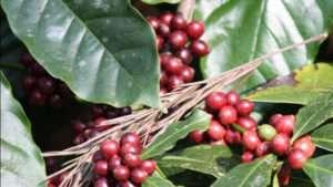 Coffee is a Hug in a Mug !- satheesh kaapi